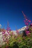 Flores y un glaciar Foto de archivo libre de regalías