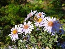 Flores y una abeja imágenes de archivo libres de regalías