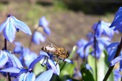 Flores y una abeja Imagen de archivo libre de regalías