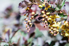 Flores y una abeja que recoge la miel Imagenes de archivo