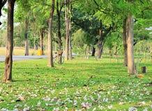 Flores y una bicicleta en la tierra en un parque público Foto de archivo