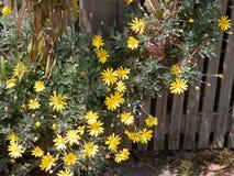 Flores y una cerca Fotografía de archivo libre de regalías