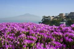 Flores y Vesuvio en un fondo Fotos de archivo libres de regalías