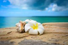 Flores Zanzibar fotografia de stock royalty free
