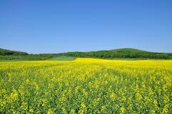 Florescência. Imagem de Stock
