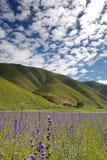 Florescência Imagem de Stock Royalty Free