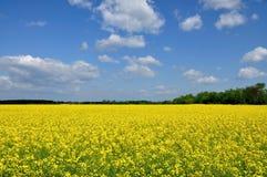 Florescência. Imagens de Stock Royalty Free