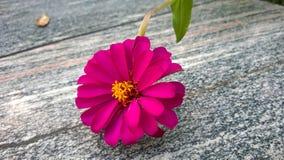 Florescência Foto de Stock Royalty Free