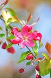 Florescência Fotografia de Stock Royalty Free