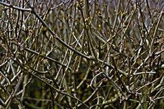 Florescência Imagens de Stock
