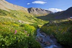 Florescência alpina das flores imagens de stock