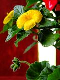 Florescência amarela brilhante da flor fotos de stock royalty free