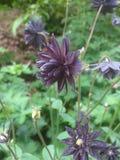 Florescência bonita Foto de Stock Royalty Free