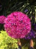 Florescência cor-de-rosa da flor fotografia de stock royalty free