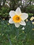 Florescência da flor branca foto de stock royalty free