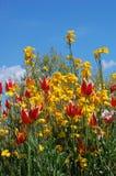 Florescência da mola Fotografia de Stock Royalty Free