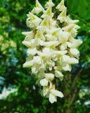 Florescência da mola Fotografia de Stock