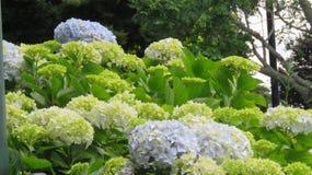 Florescência das flores Fotos de Stock Royalty Free