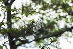 Florescência das flores Imagem de Stock Royalty Free