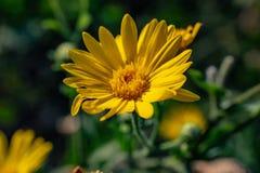 Florescência das flores selvagens foto de stock royalty free