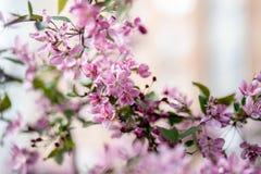 Florescência de uma Apple-árvore Fotografia de Stock