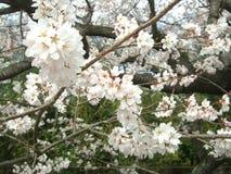 Florescência e flor bonita imagem de stock