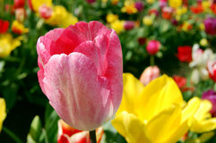 Florescência na mola imagens de stock royalty free