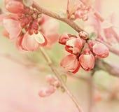 Florescência na mola Fotos de Stock Royalty Free
