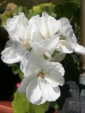 Florescência no feito foto de stock royalty free