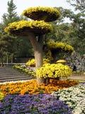 Floresce a árvore Imagens de Stock