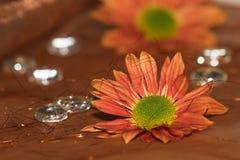 Floresce #3 Imagens de Stock