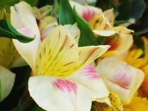 Floresce a banana Imagens de Stock Royalty Free