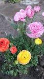 Floresce a beleza Imagens de Stock Royalty Free