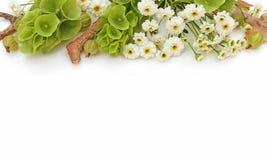 Floresce a composição Beira feita das flores, fotos denominadas com Molucella Fotos de Stock Royalty Free