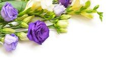 Floresce a composição no fundo branco imagem de stock royalty free
