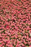 Floresce a cor completa Fotos de Stock Royalty Free