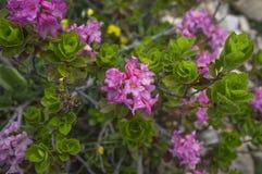 Floresce cores das montanhas Fotografia de Stock