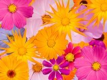 Floresce decorativo Imagem de Stock