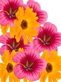 Floresce decorativo Fotografia de Stock Royalty Free