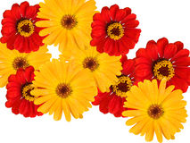 Floresce decorativo Imagens de Stock