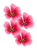 Floresce decorativo com pétalas do lilac Foto de Stock