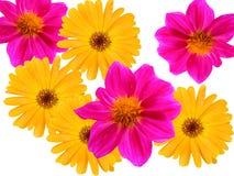 Floresce decorativo de um jardim Fotografia de Stock