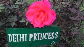 Floresce fotos Fotografia de Stock Royalty Free