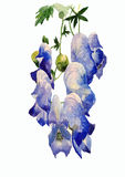Floresce a ilustração Imagem de Stock Royalty Free