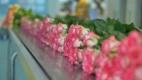 Floresce a indústria Rosas bonitas no transporte na fábrica da flor vídeos de arquivo
