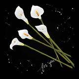 Floresce lírios de calla em um fundo preto ilustração stock
