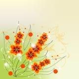 Floresce a laranja um arbusto Fotos de Stock Royalty Free