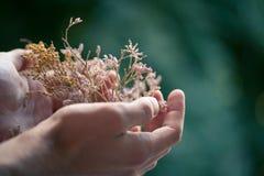 Floresce a mão masculina Imagem de Stock Royalty Free