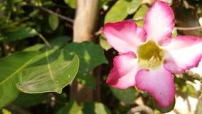 Floresce o fulgor verde fresco na noite imagens de stock