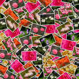 Floresce o fundo das fotos Imagem de Stock Royalty Free